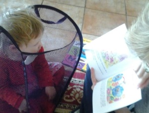 Learning about pollination from the safety of the washing basket - as you do!