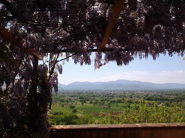 blog wisteria b